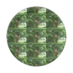 Piping Satyr Paper Plate